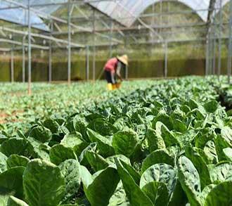 برنامه ریزی محیط و امکانات کاشت محصولات زراعی